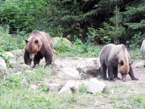 observarea ursului, programe, vanatoare