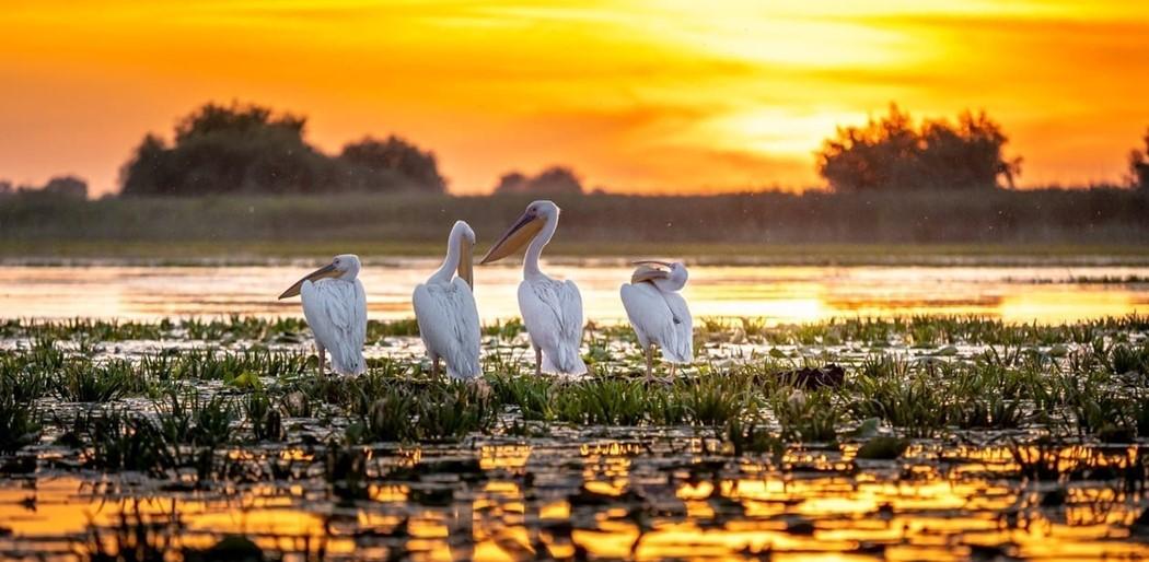 Pelikán család, Duna Delta természetbúvároknak kínált programok: madarak megfigyelése, filmezése, fényképezése
