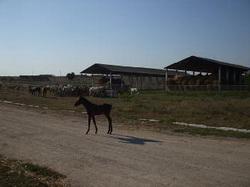 Prezentare in imagini: descriere, poze, harta, cazare, atractii–drumetii Litoralul Romanesc Cazare